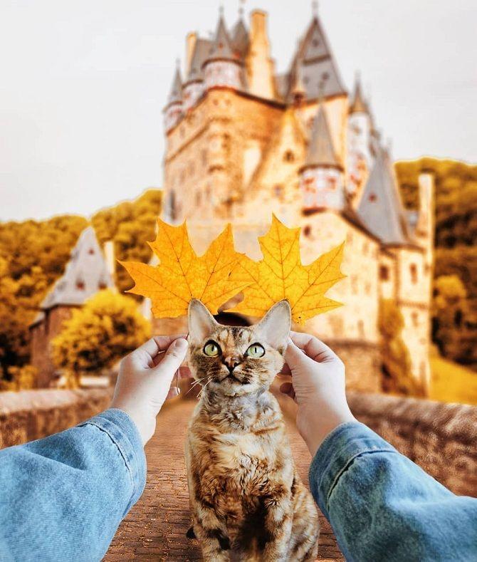 кіт на фоні замка