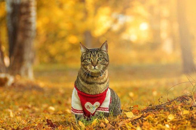 красивий кіт