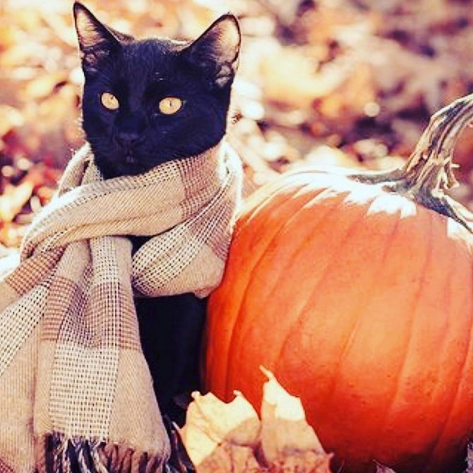 кот в шарфі з гарбузом