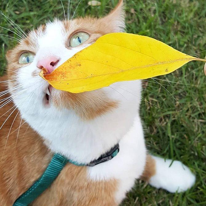фото красиві котики