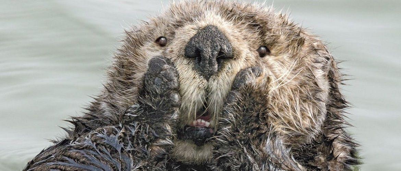 40 найсмішніших фото дикої природи Comedy Wildlife Photography Awards: фіналісти конкурсу