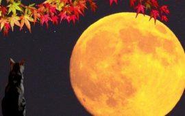 Повний місяць у вересні 2019 року: дата, сприятливі дні, місячний календар