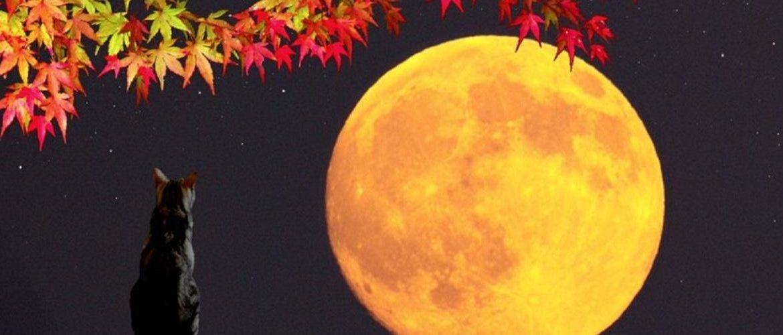 Полнолуние в сентябре 2019 года: дата, благоприятные дни, лунный календарь