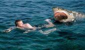 акула нападает на человека