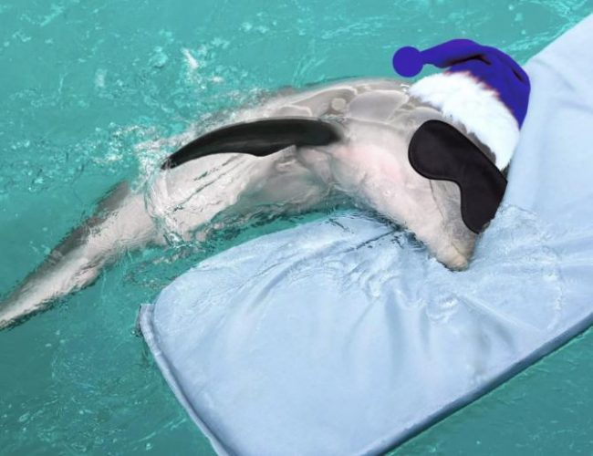 Як сплять дельфіни?