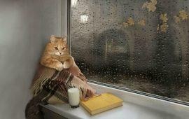 грустный кот смотрит в окно