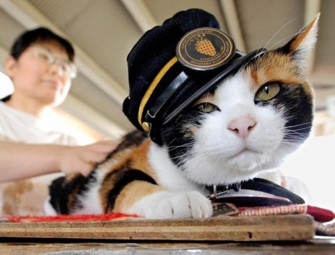Кішка Тама