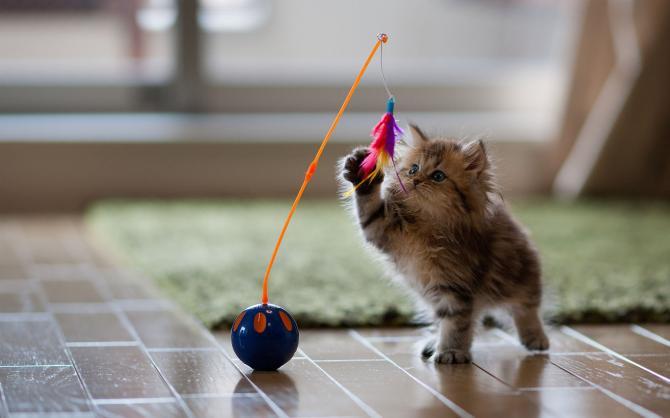 Чому котам так швидко набридають іграшки?