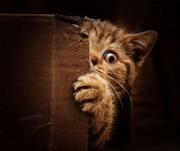 кот испугался