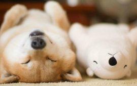 собака играет с игрушкой