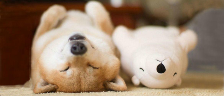 Собаки, у яких є улюблена іграшка, і вони не збираються ні з ким її ділити