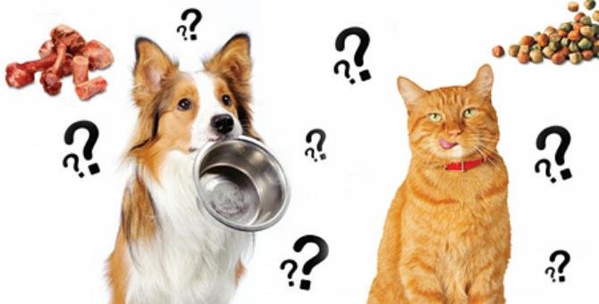 Як вибрати корм для тварини