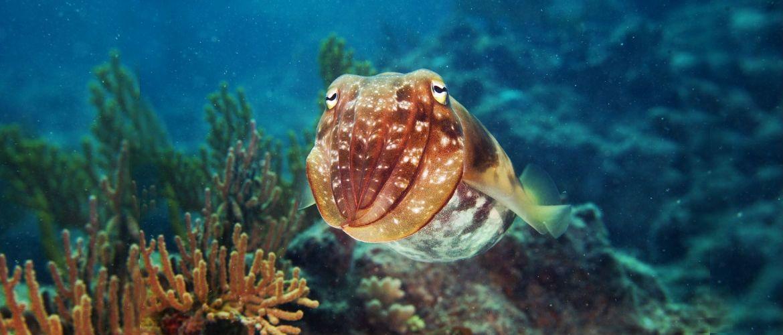 Топ-5 поразительных существ с океанских глубин