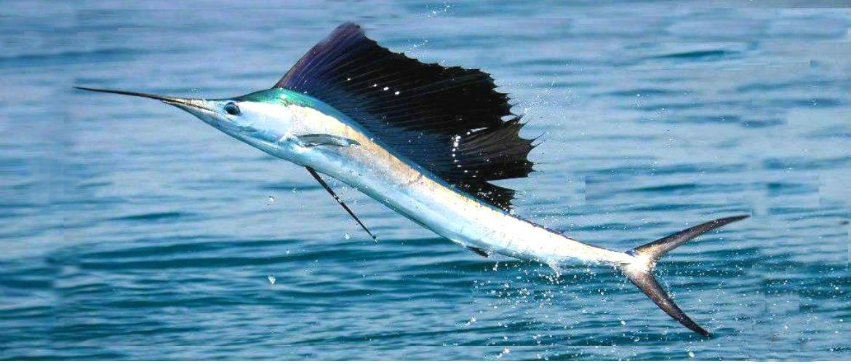 7 видів риби, які краще не їсти ніколи
