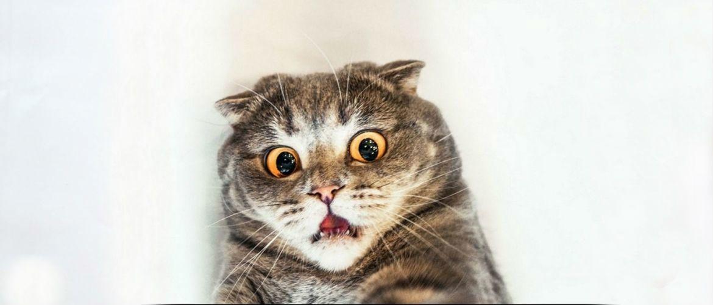 Котячі страшилки – міф та реальність
