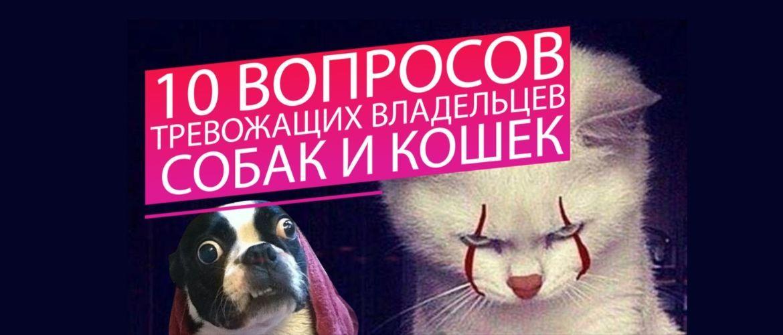 ТОП-10 питань, що турбують власників собак і кішок