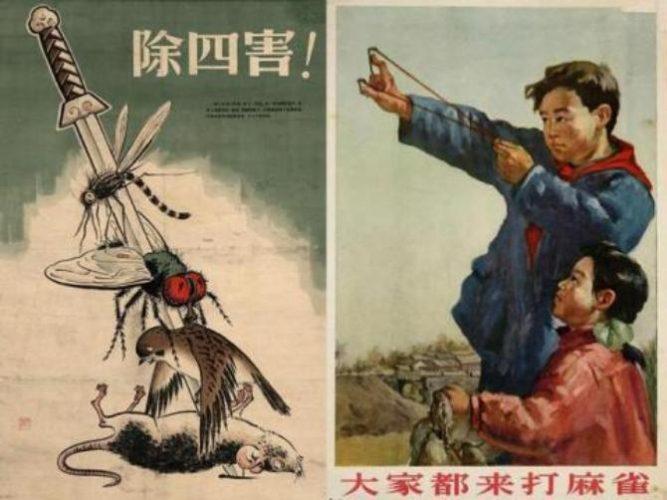 війна з горобцями в китаї