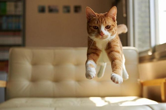 кіт стрибає