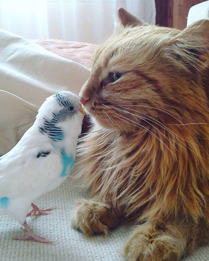 кіт з папугою