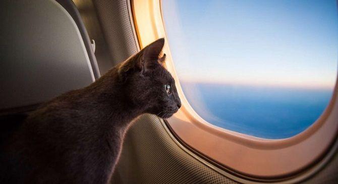 кіт біля ілюмінатора