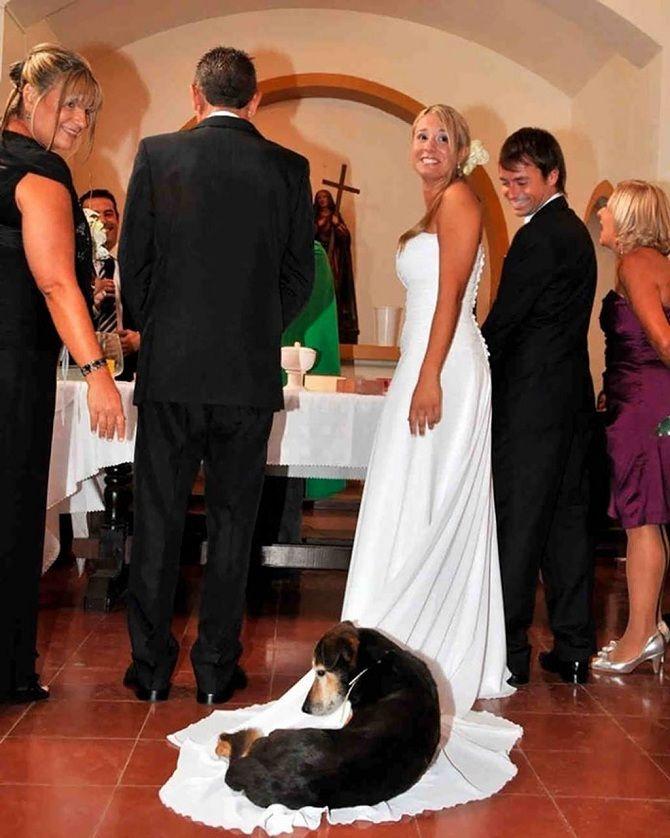 пес лег на платье невесты