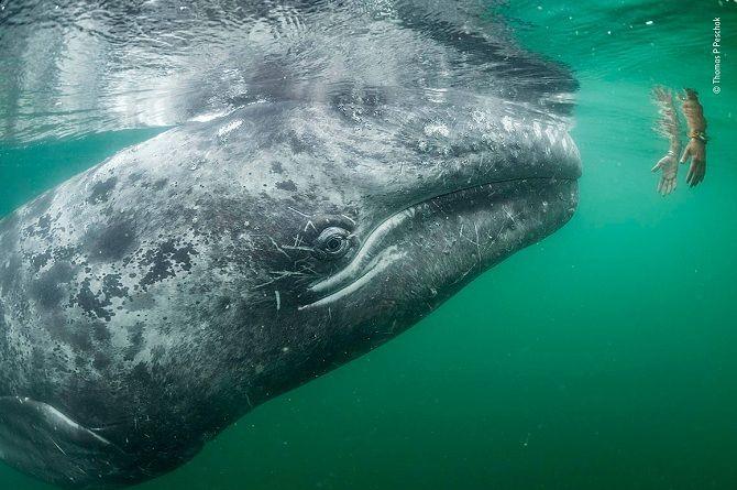 фото конкурса Кращий фотограф дикої природи 2019