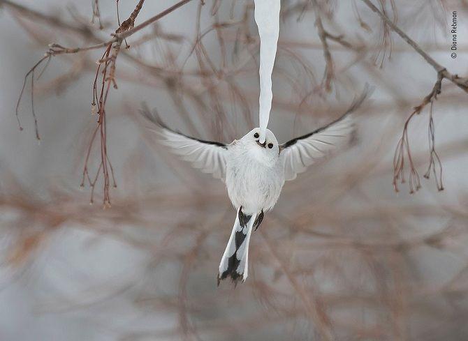 фото финалистов конкурса Лучший фотограф дикой природы 2019