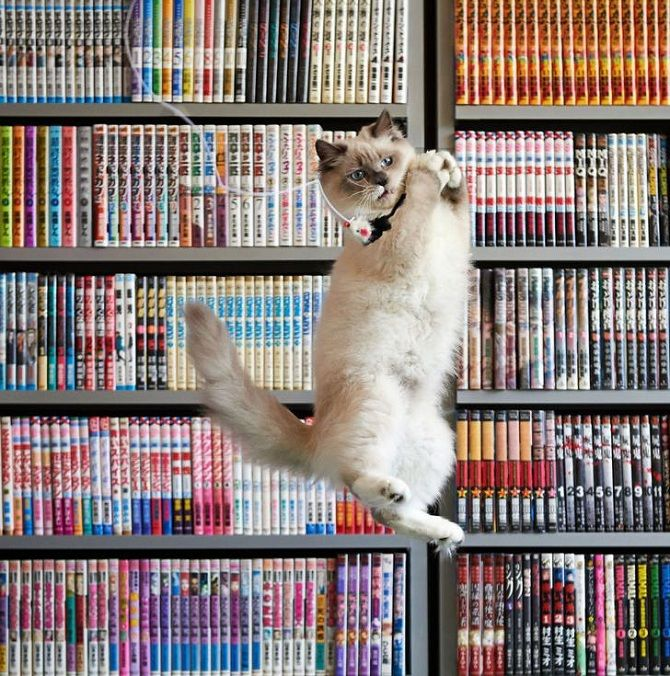 літаючі коти