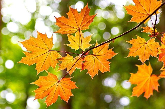 осінь, листя
