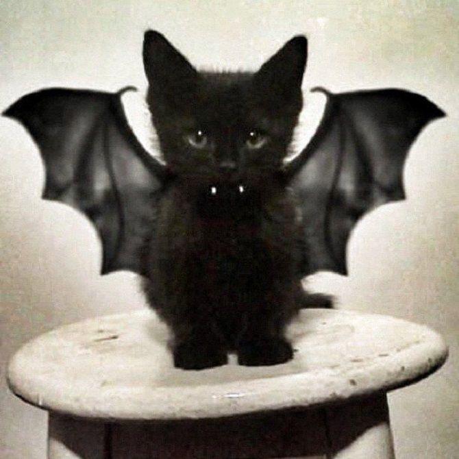 котенок в костюме вампира