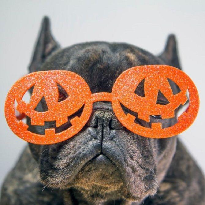 пес в очках тыквах