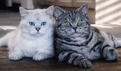 Почему коты… или главные вопросы о котиках, на которые вы давно хотели получить ответы
