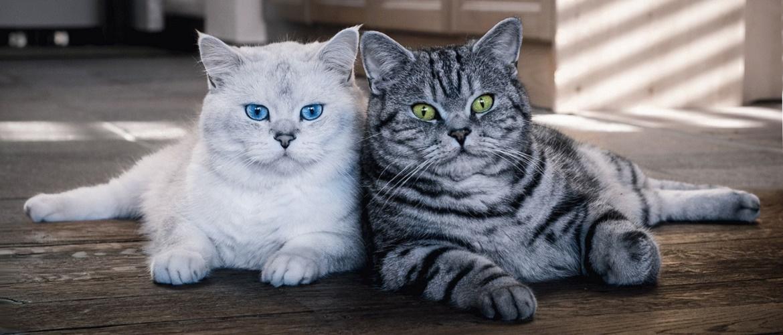 Чому коти… або головні питання про котиків, на які ви давно хотіли отримати відповіді