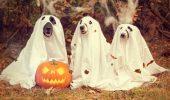 собаки на хэллоуин