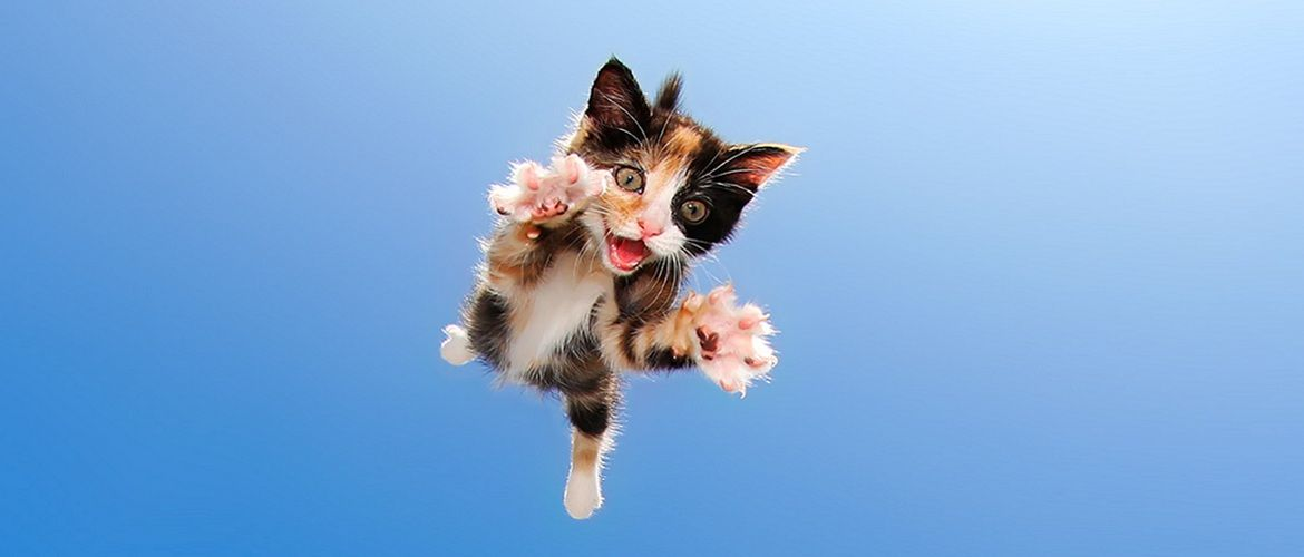 20 photos proving cats can fly