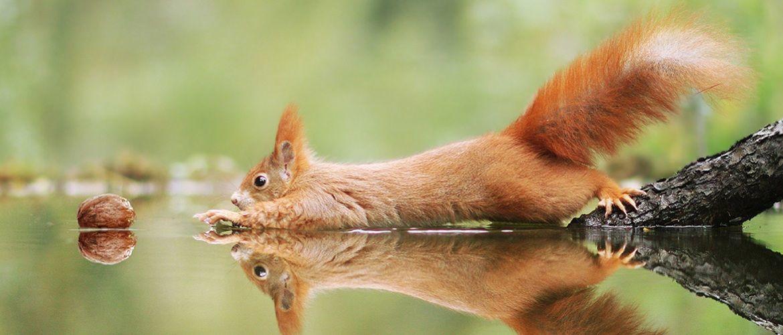 Герт Вегген и белочки: удивительные фото диких зверьков