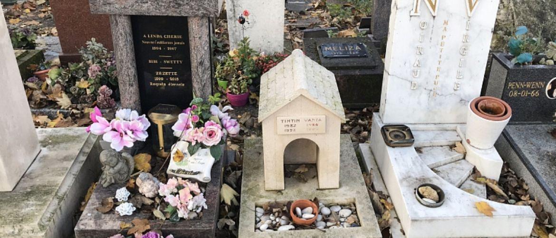 5 кладбищ домашних животных, которые точно стоит посетить
