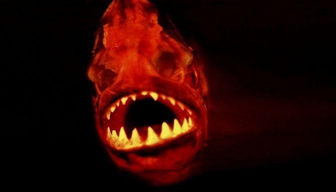 Ужасы, от которых кровь стынет в жилах: Топ фильмов про пираний 1