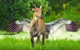 корова птица