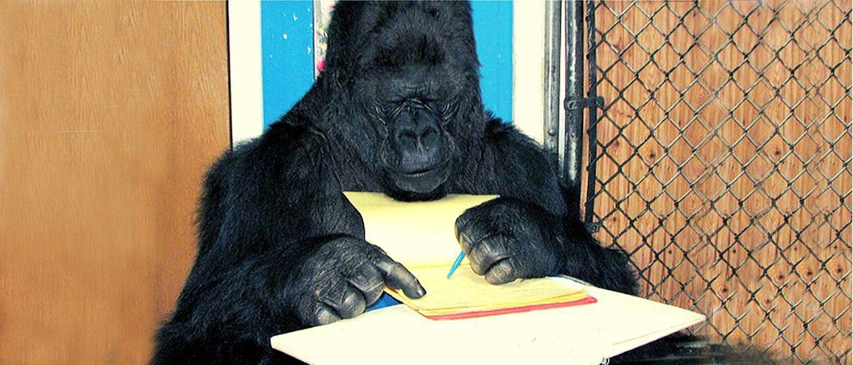 20+ доказів, що тварини розумніші, ніж ми думаємо