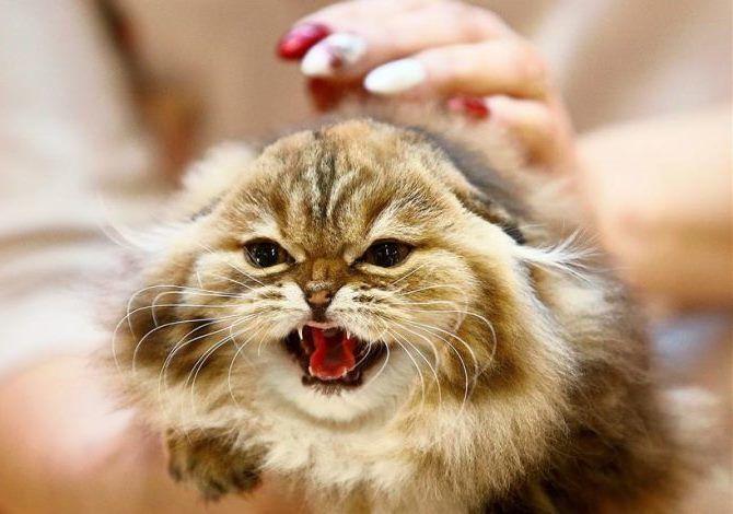Що думають про нас коти? 1