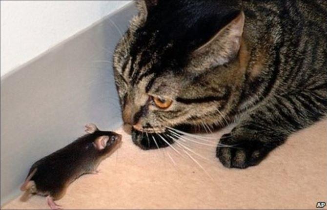Що думають про нас коти? 2