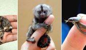 самые маленькие животные