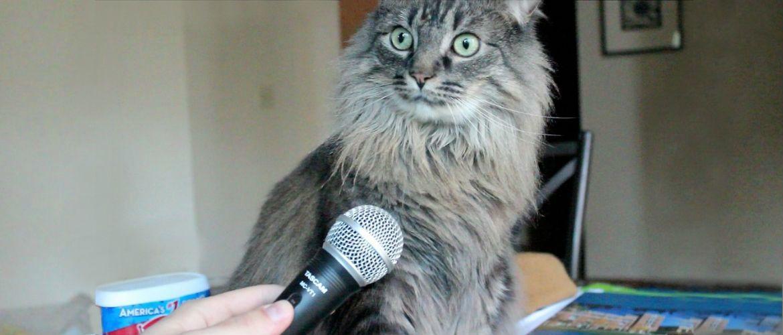 Що думають про нас коти?