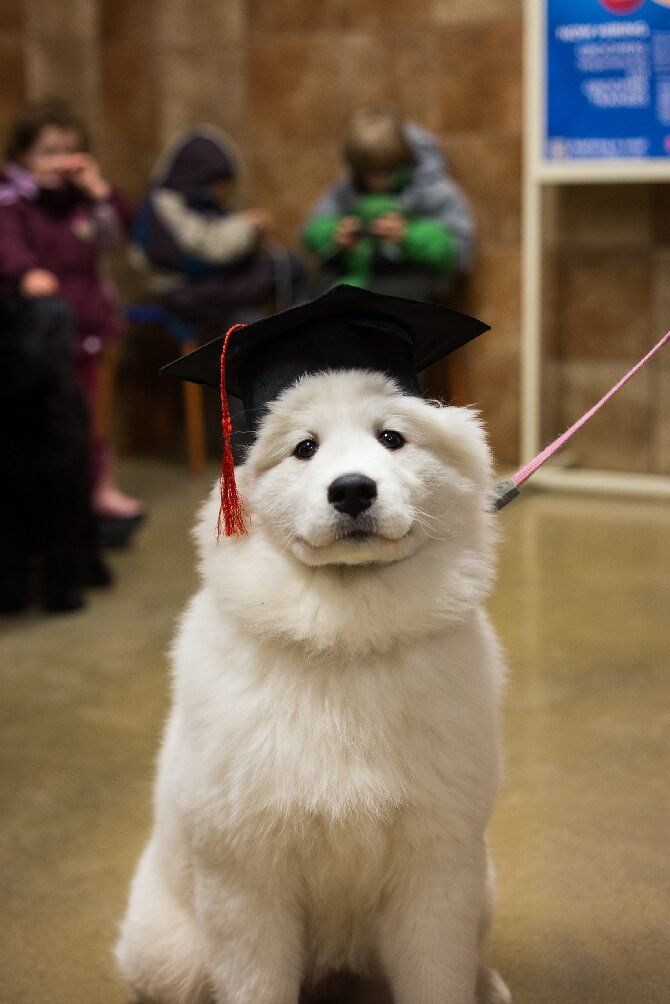 пес белый