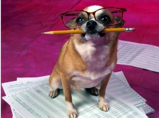 песик в очках