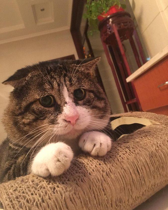20+ эмоциональных котов, у которых все в порядке с мимикой 1
