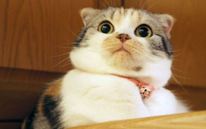 кот удивляется
