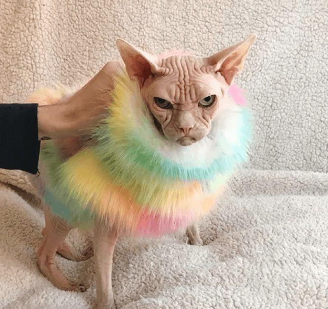 кот злится
