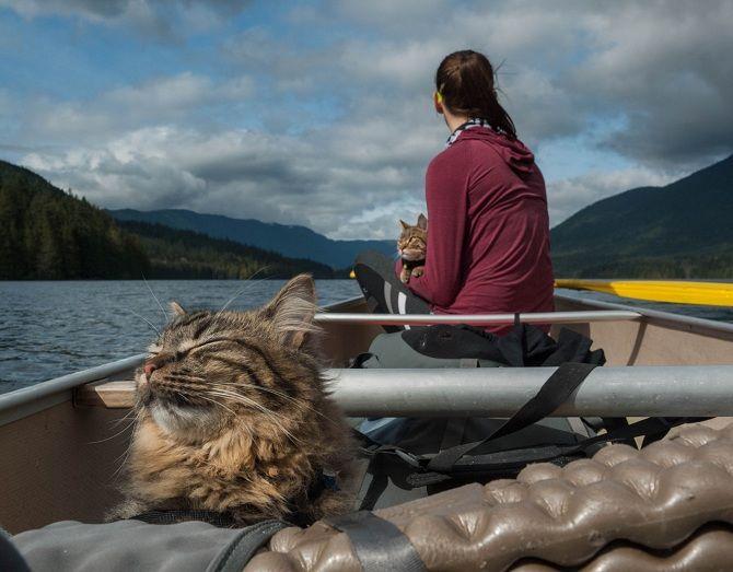 Кошки на лодке
